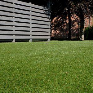 PermaLawn Hadano Grass